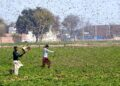 (200216) -- OKARA, Feb. 16, 2020 (Xinhua) -- Photo taken with mobile phone on Feb. 15, 2020 shows Pakistani farmers trying to avoid locusts swarming in Okara district in eastern Pakistan's Punjab province. Locust attack on crops incurred heavy financial losses to farmers in some areas of the country. (Str/Xinhua) (Xinhua/Stringer via Getty Images)